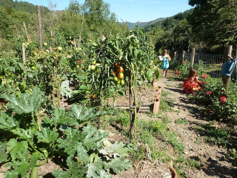 Plantation aux jardins des Fangouses
