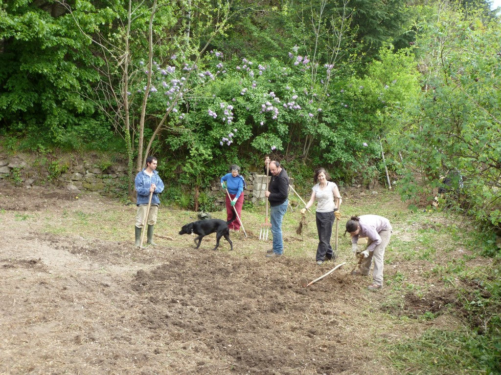 Préparation du sol avant plantation Mai 2014