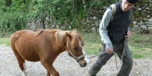 13 chevaux3