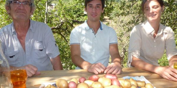 Récolte :  variété de pommes de terre