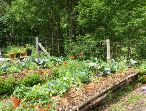 Balade botanique et gustative
