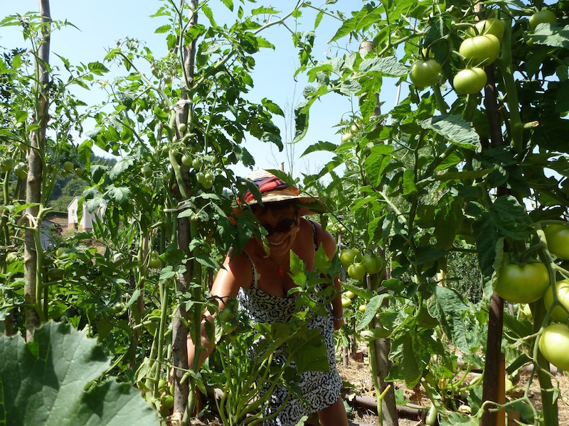 Récolte dans les jardins