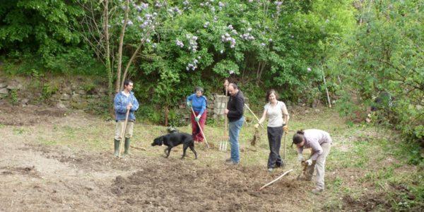 Préparation du sol avant plantation